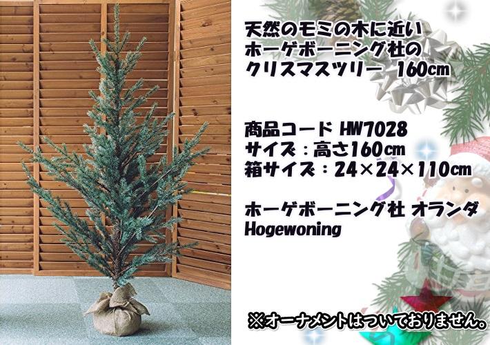 ホーゲボーニング社Hogewoning クリスマスツリー もみの木